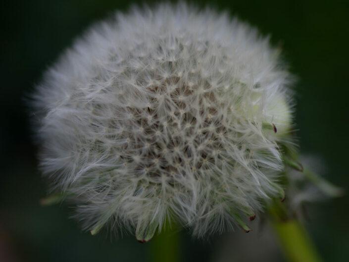 Macro dans le jardin